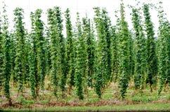 La crescita salta nel Michigan U.S.A. Immagine Stock Libera da Diritti