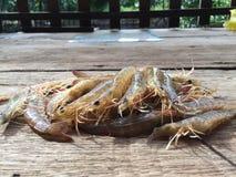 La crevette vietnamienne de greasyback ou crevette de sable, ensis de Metapenaeus Photographie stock libre de droits