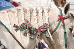 La criniera del cavallo ha intrecciato Immagini Stock