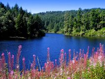 La crique avec des wildflowers s'approchent de Gardiner, Orégon image stock
