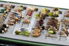 La crisalide della mosca bagnata vola Fotografia Stock Libera da Diritti