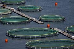 La Croatie - élevage de poissons Photographie stock