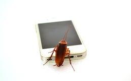 La cucaracha le gusta tecnología Fotografía de archivo