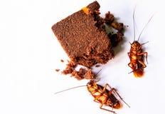 La cucaracha lleva la enfermedad al ser humano, diarrea o la intoxicación alimentaria, higiene de las manos le protege contra enf fotografía de archivo