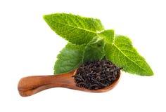 La cuchara con té de las hojas y la menta verde fresca hojean aislado en el fondo blanco Foto de archivo libre de regalías