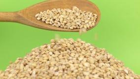 La cuchara de madera vierte la cebada de perla de los granos en el montón de la cebada de perla en una pantalla verde metrajes