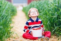 La cueillette de petit garçon et les fraises de consommation sur la baie cultivent Image libre de droits