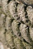 La cuerda Imagenes de archivo
