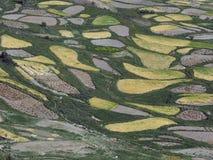 La cuesta de la montaña, cubierta con los campos amarillos y verdes, Tíbet, el Himalaya Fotos de archivo libres de regalías