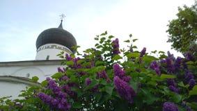 La cupola della chiesa dell'arcangelo Michael nella città di Pskov e dei lillà porpora che fioriscono nella priorità alta Fotografia Stock