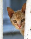 La curiosidad de los gatos Imágenes de archivo libres de regalías