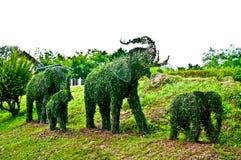 La curvatura dell'albero degli elefanti Fotografia Stock Libera da Diritti