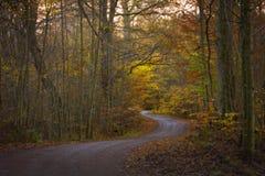 La cuvette de route le papier peint de forêt d'automne Photographie stock libre de droits