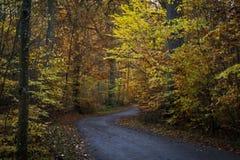 La cuvette de route les bois en automne Photo stock