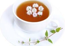 La cuvette de thé vert a isolé Image stock