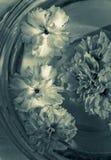 la cuvette fleurit l'eau en verre Images libres de droits