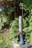 La décoration de jardin faite de caoutchouc huent photos libres de droits