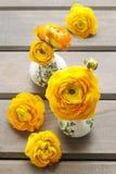 La décoration florale de la renoncule persane jaune fleurit (ranunculu Photographie stock libre de droits