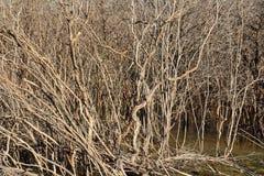 La dégradation de forêt de palétuvier Photographie stock libre de droits