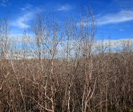 La dégradation de forêt de palétuvier Image libre de droits