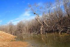 La dégradation de forêt de palétuvier photos libres de droits
