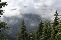 La dérive opacifie du point de lever de soleil, parc national olympique, Washington image stock