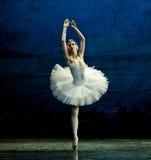 La danse blanche de cygne Photographie stock libre de droits