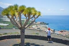 La de littoral de garçon regardant le palma photographie stock libre de droits