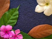 La decoración de las flores púrpuras y blancas con las hojas verdes y marrones Fotografía de archivo