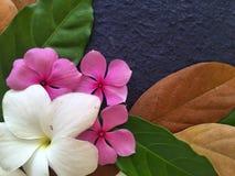 La decoración de las flores púrpuras y blancas con las hojas verdes y marrones Foto de archivo libre de regalías