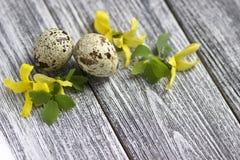 La decoración de Pascua con amarillo de la primavera florece y los huevos de codornices en viejo fondo de madera Huevos de Pascua Imágenes de archivo libres de regalías