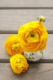 La decoración floral del ranúnculo persa amarillo florece (ranunculu Imagen de archivo