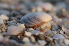 La decorazione delle spiagge del mare si chiude su Fotografie Stock
