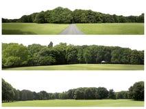 La definizione molto alta Treeline isolaeted su un fondo bianco immagini stock