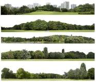 La definizione molto alta Treeline isolaeted su un fondo bianco fotografia stock