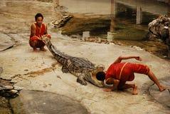La demostración del Crocodylidae o del cocodrilo Imagen de archivo