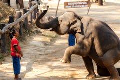 La demostración del elefante puso el sombrero a su cabeza del mahout Fotos de archivo