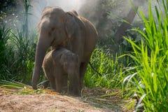 La derecha joven del elefante al lado adulta Imagen de archivo
