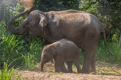La derecha joven del elefante al lado adulta foto de archivo
