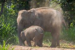 La derecha joven del elefante al lado adulta Foto de archivo libre de regalías