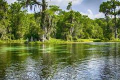 La deriva abajo de un río en Wakulla salta parque de estado Imagen de archivo libre de regalías