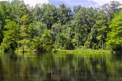 La deriva abajo de un río en Wakulla salta parque de estado Imagenes de archivo