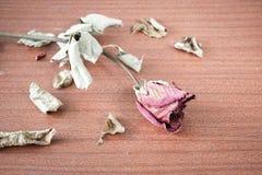 La dernière valentine Image stock
