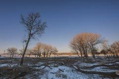 La destrucción de bosques en invierno imagenes de archivo