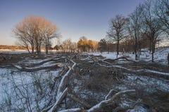 La destrucción de bosques en invierno foto de archivo libre de regalías