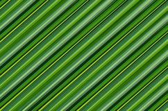 La diagonale verde di struttura della palma del fondo allinea l'immagine di verdure senza fine del modello Fotografia Stock