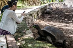 La Digue, Seychellerna, 22/12/2014: Asiatiska turister fotograferar en jätte- sköldpadda i den argent Anse källan D ' royaltyfri bild