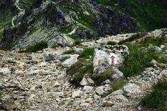 La dirección de la trayectoria en las montañas en el pavimento de piedra Foto de archivo libre de regalías