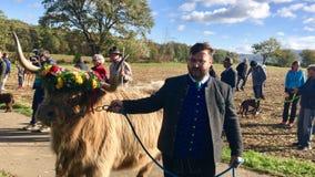 La discesa cerimoniale del bestiame dalla montagna pascola nelle camice sveve Fotografia Stock