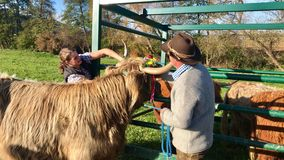 La discesa cerimoniale del bestiame dalla montagna pascola nelle camice sveve Fotografie Stock Libere da Diritti